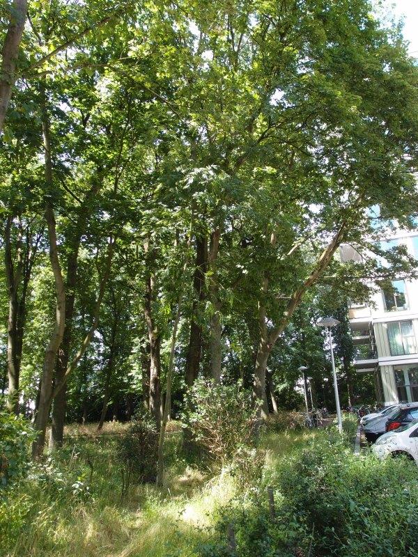 Een deel van het Hommelbos en de omstreden parkeerplaats. Foto: Louis Engelman