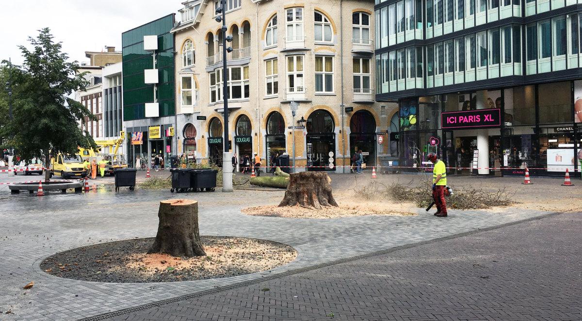 Twee boomstronken van de omgezaagde platanen op het Vredenburg. Foto: Dik Binnendijk