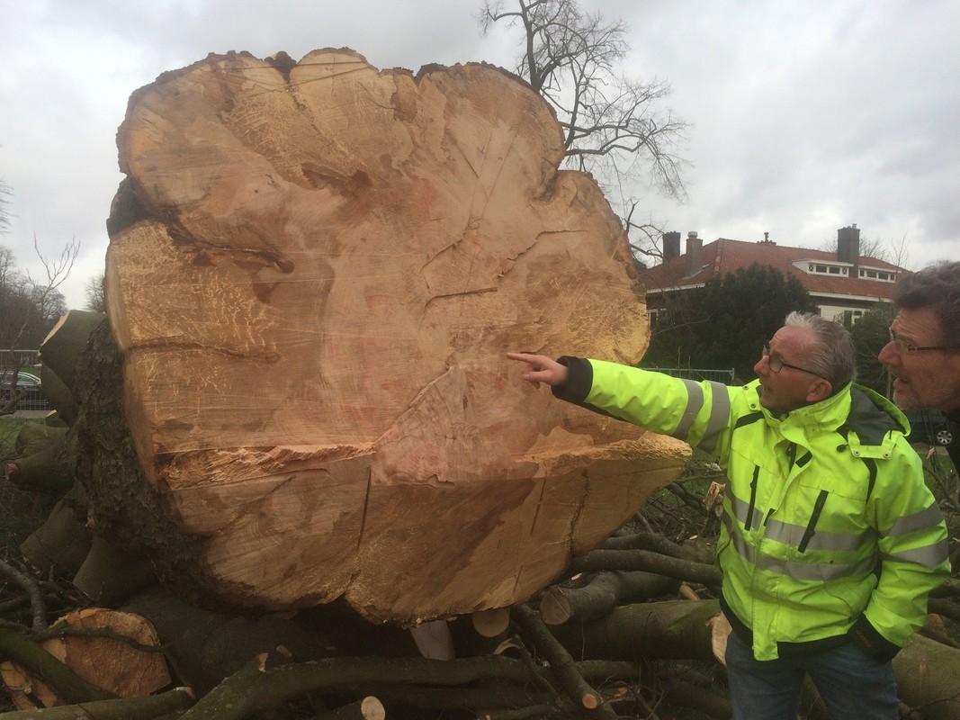 De Utrechtse bomenexpert Frank van den Brink bij de beuk, woensdag 12 februari 2020. Foto: Jim Terlingen